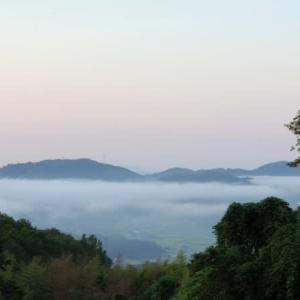 霧の舞う・・・四季桜など