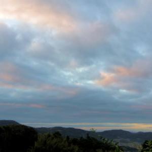 昨日の朝景色・ホオジロ・ツワブキ