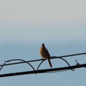 ウォーキングろ路脇の野鳥