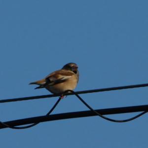 路傍脇からの野鳥など