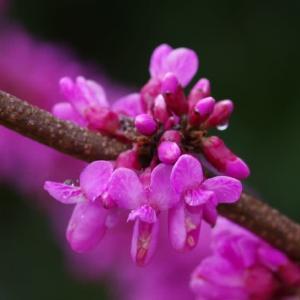 昨日の我が家で咲く花の一部です