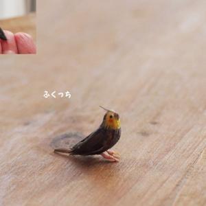 小鳥さんの足でした♪