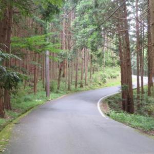伊豆 早霧湖と蛭ヶ島茶屋