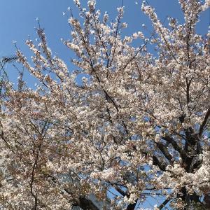 春を愛する