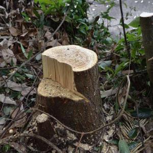 資材置き場の伐採