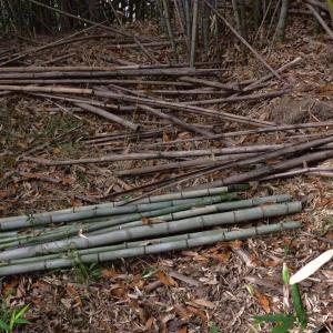 竹仕事の準備とブロッコリーの収穫