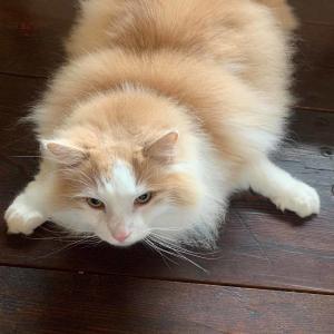 ねこと暮らすびと 猫さんの写真
