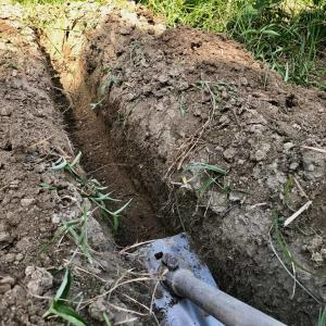干しネギの深植え