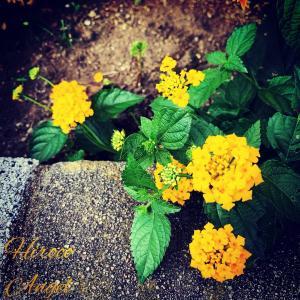 ★ ヒロコエンジェルの * 天使の愛コトバ & Photo * ★ 19/8/4