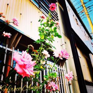 ★ ヒロコエンジェルの * 天使の愛コトバ & Photo * ★ 19/8/8
