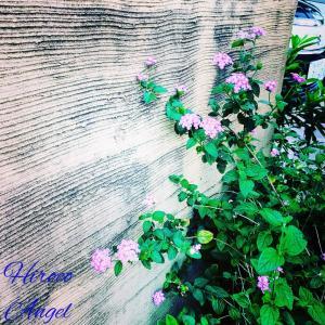 ★ ヒロコエンジェルの * 天使の愛コトバ & Photo * ★ 19/8/17