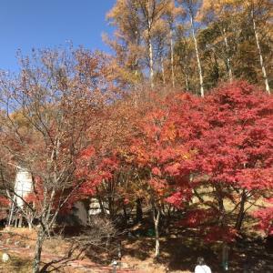 晩秋の四徳温泉で薪ストーブ始めました!!
