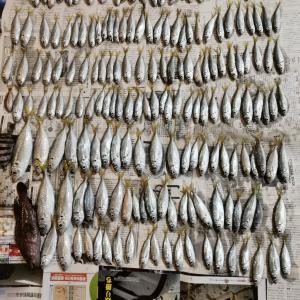 【朗報】ワイ釣り初心者、明日からアジフライ食べ放題