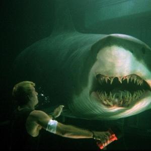 【悲報】サメ映画のサメ、概念になる
