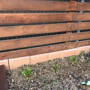 【DIY】ウッドフェンス造りその後・困った事が発覚!【1年後】