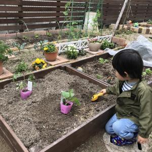 【家庭菜園】レイズドベッドDIYして畑を拡張【2年目】