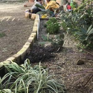 【庭】0から始めた庭づくり。3年目の今。