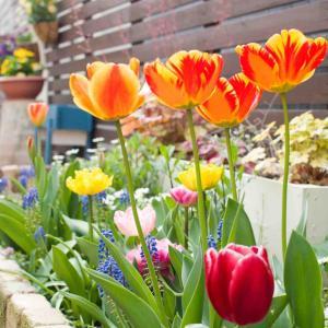 【庭】0から庭づくり。4年目の今【まとめ】