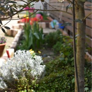 【庭】0から始めた庭づくり。2年目の今。