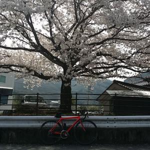 春爛漫の小豆島ライド③