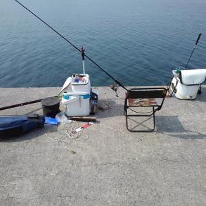 始めての漁港は最高でした。