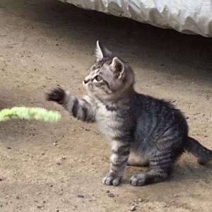 迷子?捨て猫?ちび猫保護