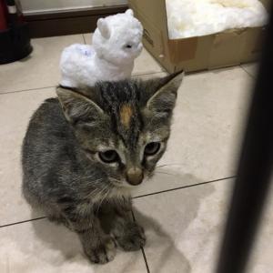 命名「メロン」ちゃん&猫会参加ありがとうございました