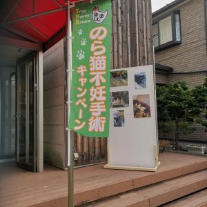 ☆のら猫不妊手術キャンペーン 譲渡会本日☆