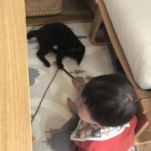 ☆小さい子供と子猫・その後☆