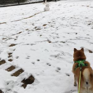 雪雪雪の連休