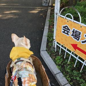 """お詫びに""""いちょう祭"""""""
