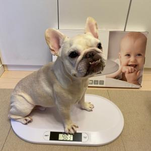 愛犬の体重の量り方‼︎