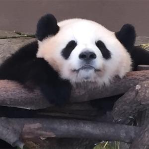 癒される・・・南紀白浜でパンダに超接近体験!