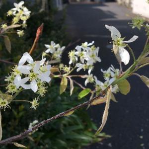 何という花?