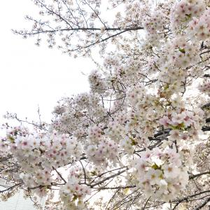 【名古屋市西区】瞑想ヨガ & 志村園長…