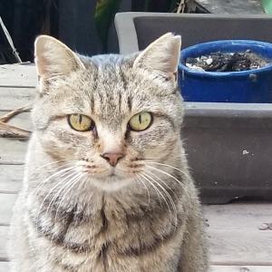 わが家に来た猫、サクラ♡♡♡