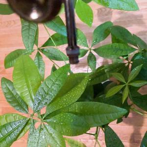 【一鉢の観葉植物も命:泌尿器系の病気には『水』が関係するけど】