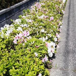 春の花と筍料理