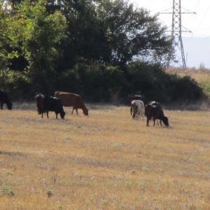 ブルガリア生活 庭の果物・牛乳を買いに牧場へ・バーベキュー