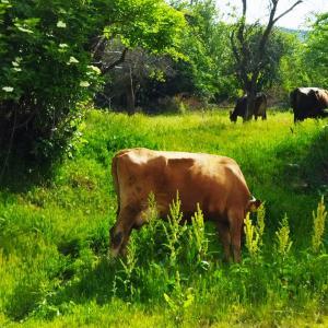 2021年シプカ生活 シプカの町と牧場