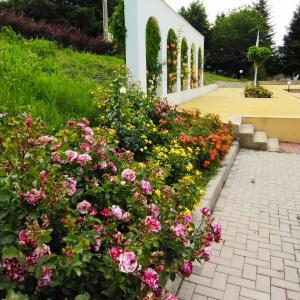 バラと黄色いサクランボとラベンダー