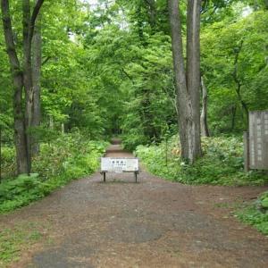 野幌森林公園にてギンランなどを見る