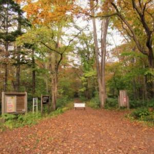 紅葉の野幌新林公園とスズメ