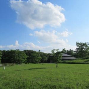 野幌森林公園の雲や花など
