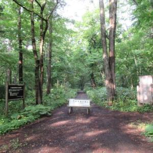 図書館から野幌森林公園へ