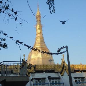 2019 ミャンマー瞑想道場ジプシー日記 60日目 西に行けたらなぁ・・ 5月6日(月)