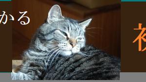 猫でもわかる韓国語【初級編】Easy Korean 2 第2課(練習問題)