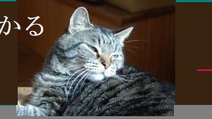 猫でもわかる韓国語【上級編】  결혼이민자와 함께 하는 한국어 4 第2課