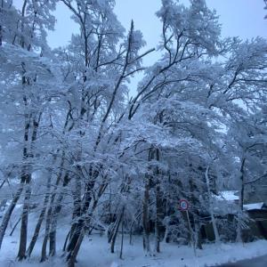 雪ふりました!