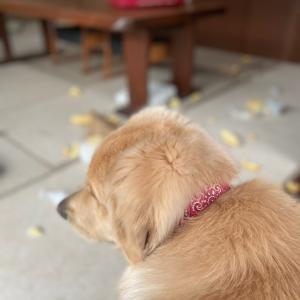 犬のいるあるある生活